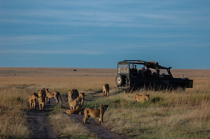 governors camp, game drives, travel africa - Kenya Safaris