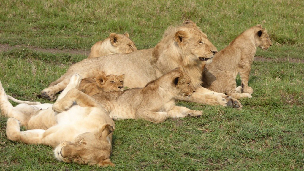 Lions in Nairobi National Park Tour - Nairobi