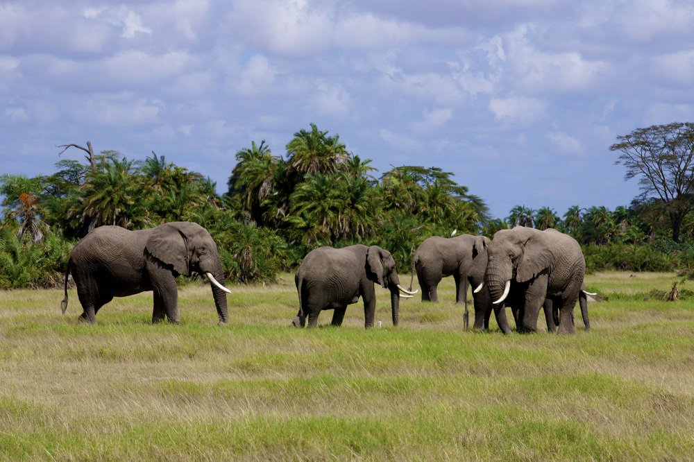Tsavo East and West Safari, Safari in Tsavo - Mombasa