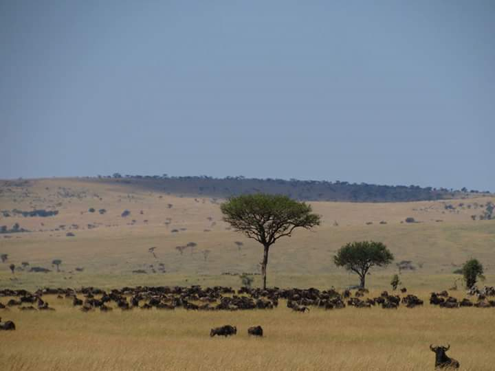 Migration, Kichwa Tembo, Africa Tour - Luxury