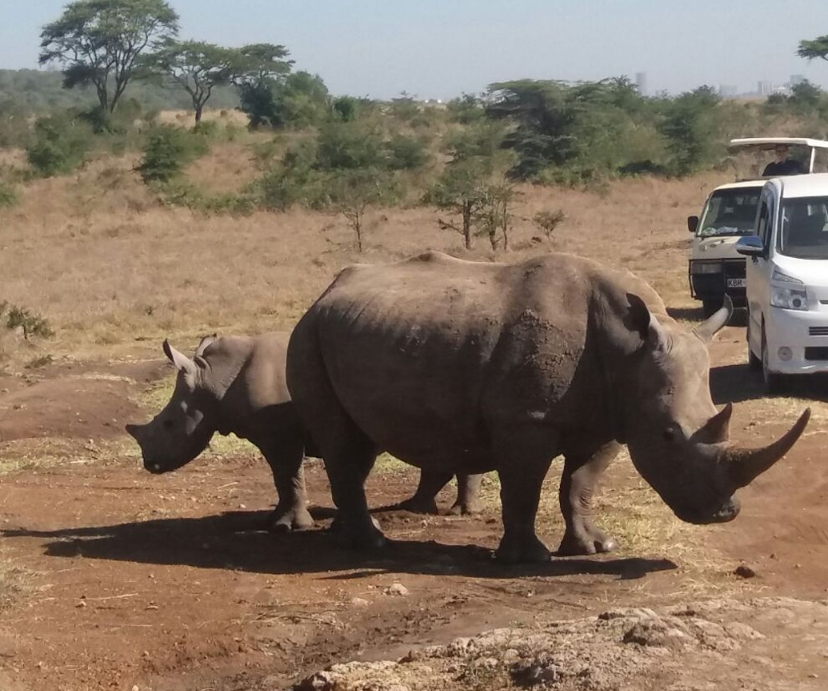 Black rhino in Nairobi National Park Tour - Nairobi