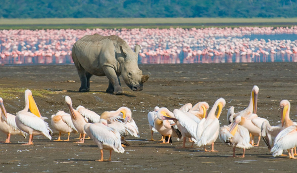 Lake Nakuru tour, nairobi tours, lake nakuru national park prices - LakeNakuruNationalPark