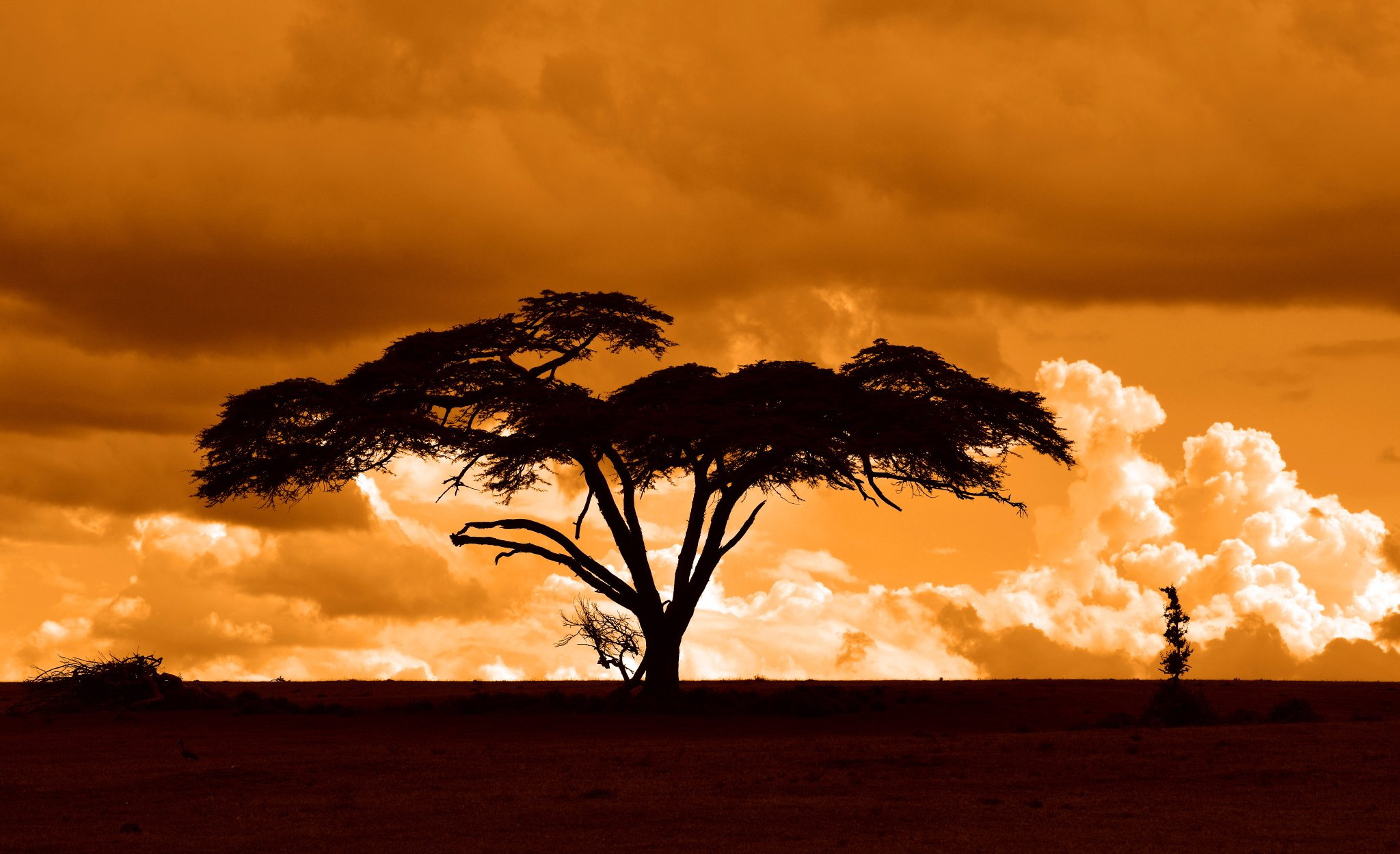 Tour,  Tours, Trips, Vacation to Kenya, Safari Holidays -  Masai Mara