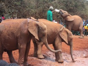 Elephant Tour from Nairobi