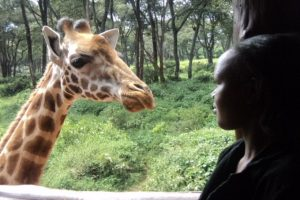tour to giraffe center in nairobi