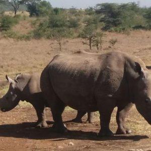 Nairobi Tours and Kenya Safaris Travel Package