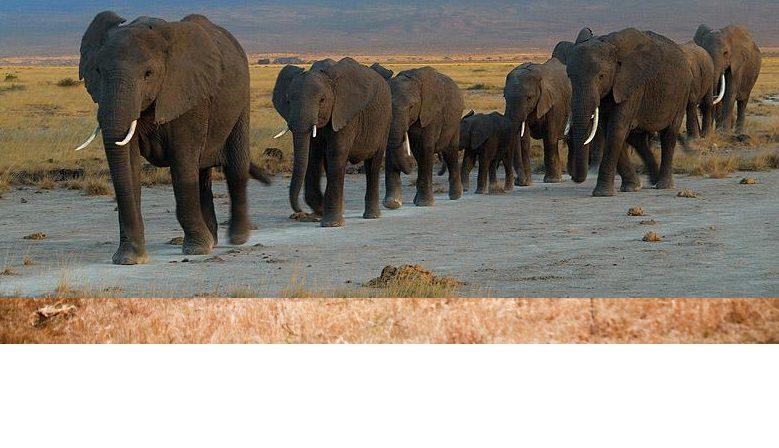 Dating sites in kenya nairobi safaris