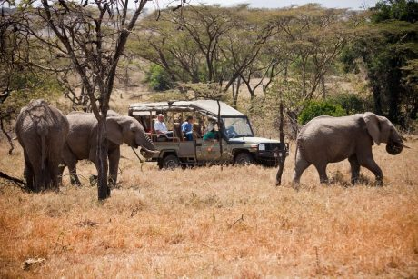 game drives with open side vehicles