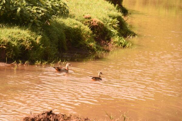Rivers in Kenya