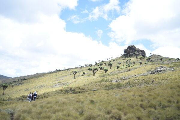 Hiking and walking trips